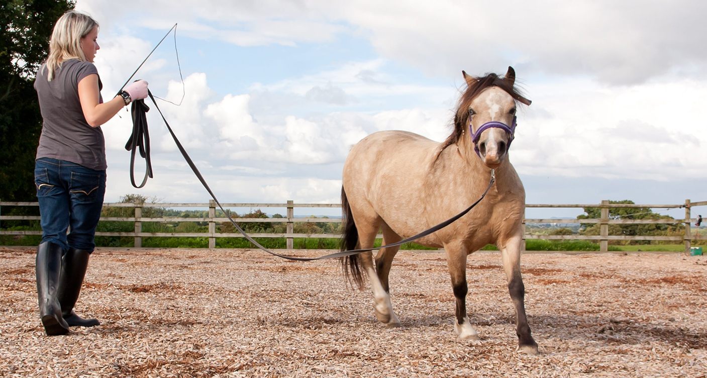 Your Complete Guide to Horse Whips