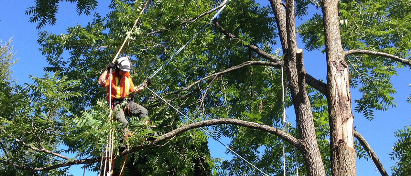 Top Notch Tree Trimming Services in Vancouver