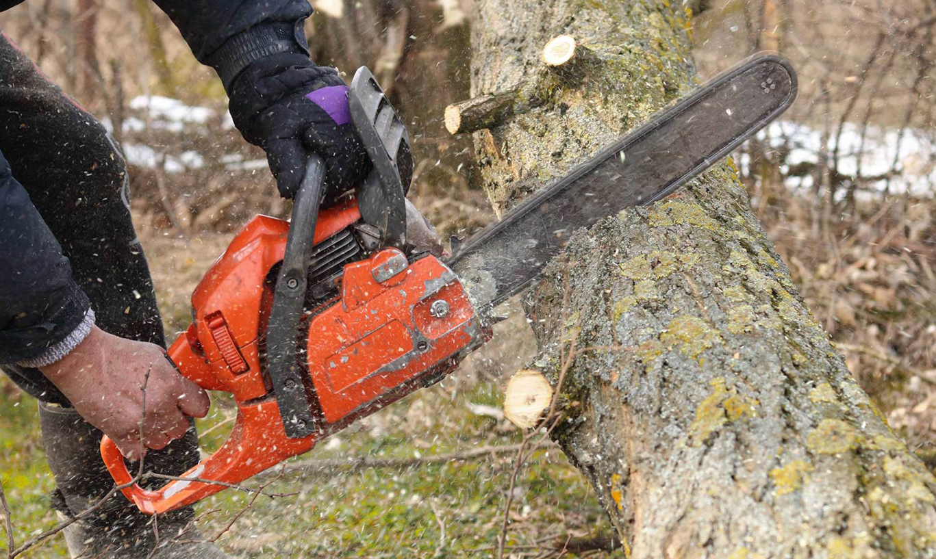 Opting For Tree Care Services