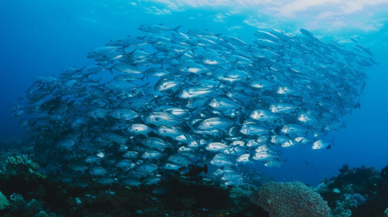 Shoal of fish underwater