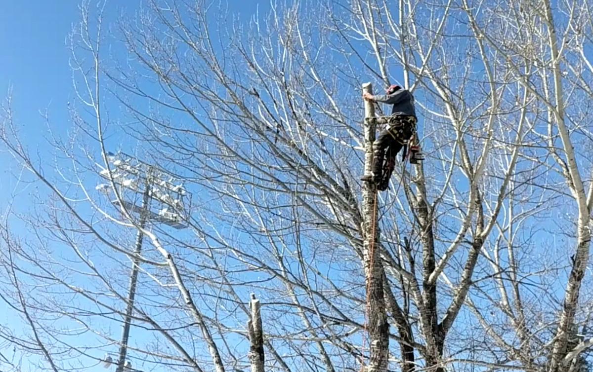 davey tree expert company subsidiaries