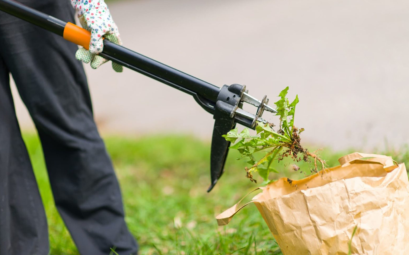 Why Weeds Cannot Stay in Your Garden